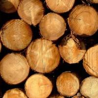 Learn all about WOOD in Herefordshire