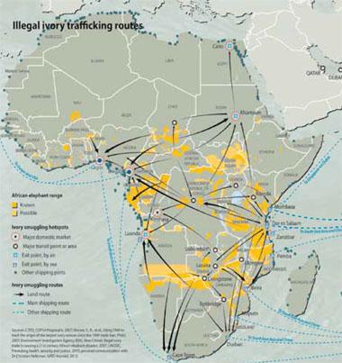 Illegal ivory trafficking routes