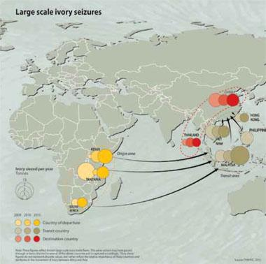 Large scale ivory seizures - On leaving Africa, shipping routes are often tortuous and difficult to trace.