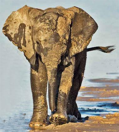 There is no magic solution to the poaching threat facing elephants; rather, more work done better needs to happen at multiple levels.